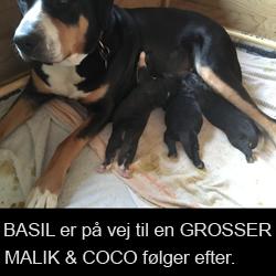 Basil_14-3
