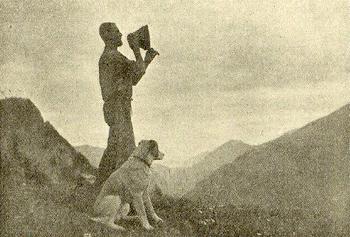 Schweiziske Sennenhunde